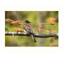 Eastern Phoebe Flycatcher - Photo Painting Art Print
