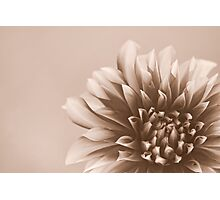 Just A Flower Photographic Print