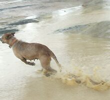 Dog or Kangaroo?? by Edwina Hare
