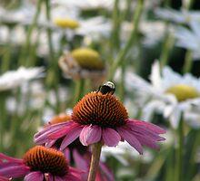 Bee Perch by Trish Nicholas