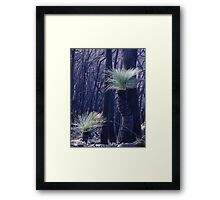 Signs of life after the fire Framed Print