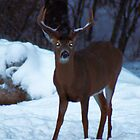 Rack Buck by mlaprade