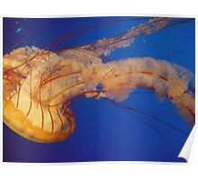 Undulating Jelly Poster