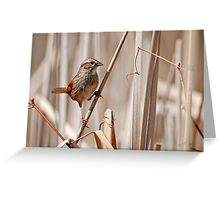 Swamp Sparrow - Ottawa, Ontario Greeting Card