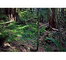 Lush Forest in Pacific Northwest Photographic Print