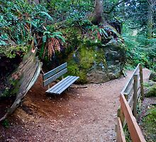 Bench on Path, Snoqualmie Forest by Stacey Lynn Payne