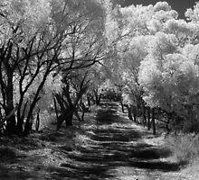 Country Lane ~ York, WA by Pene Stevens