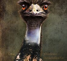 emu, all bluff by hartpix
