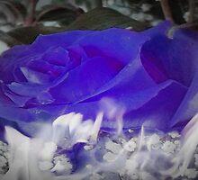 The Flaming Blue Rose by Gail Bridger