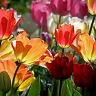 Tulip Lanterns by Patty Boyte