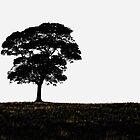 Lone Tree by Karen  Betts