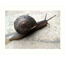 114 - SNAIL IN OUR GARDEN - 03 (D.E. 2010) Art Print