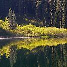 Lower Lindsay Lake Reflections  by Patty Boyte