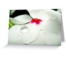 Ivory Petal Rain Drop Greeting Card