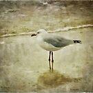 Solitude by Edge-of-dreams
