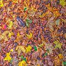 #1 - Autumn by Philip Johnson