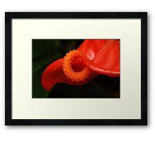 Red Hot Pretzel Framed Print