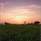 Colours of Sunset by Abhinav