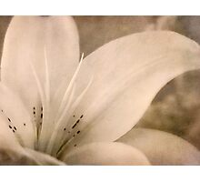 Lyrical lily Photographic Print