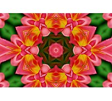 Red Lily, Yellow Lily, Red... Photographic Print