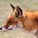 Fox_6218  by DutchLumix