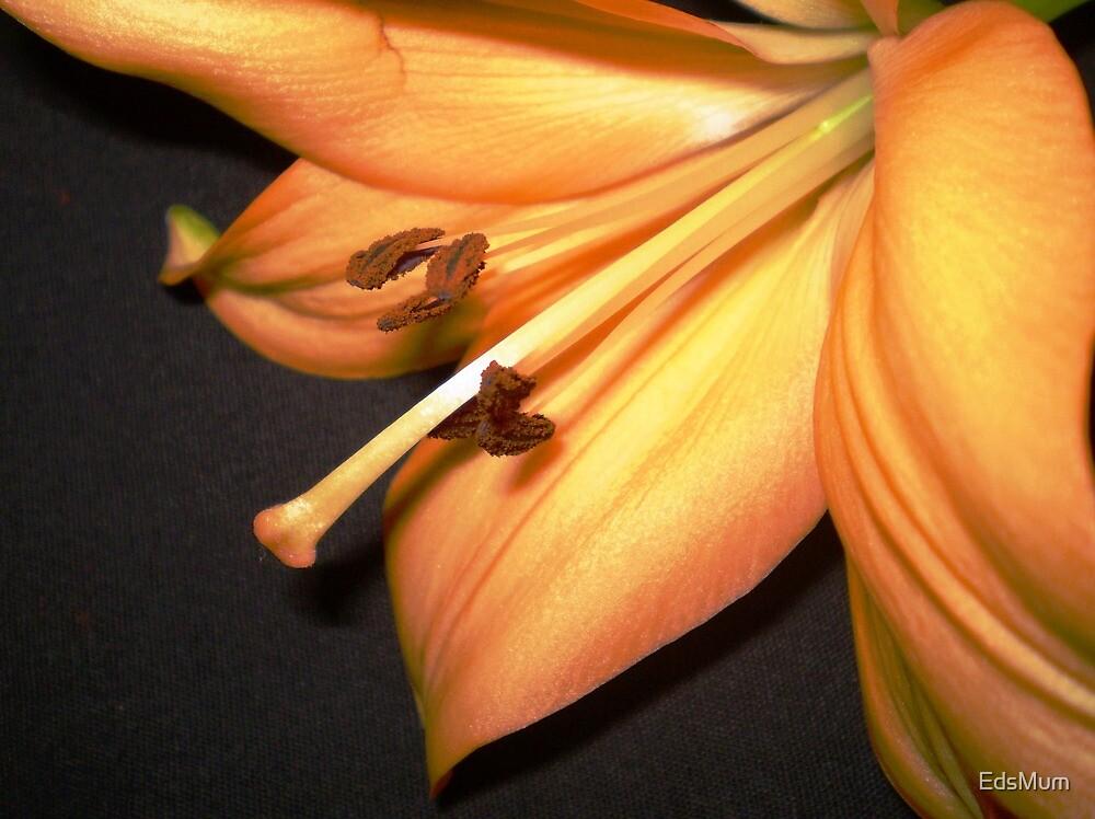 Orange Lily  by EdsMum