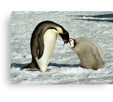 Emperor Penguin Feeding Chick, Antarctica  Canvas Print