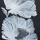 White Poppies on Black by FranEvans