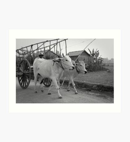Cambodian Farmer Art Print