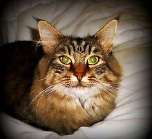 Inquisitive Insul - watchful & alert by EdsMum