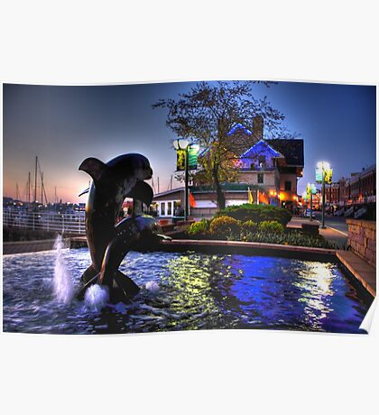 Dolphins in Baltimore Poster