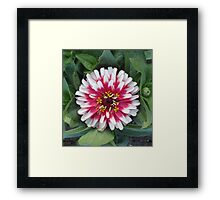 Red or Pink & Pretty Pom-Pom? Framed Print