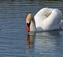 Gentle Reflections by Susie Peek