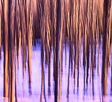 Winter Trees Swipe by ezindo