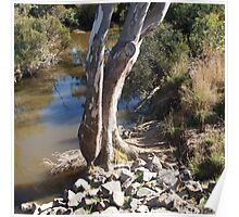Sugarloaf Creek, Broadford, Victoria Australia Poster