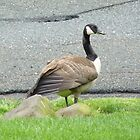 A Goose Up Close by Monica Engeler