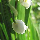 Lily of the Valley by Pamela Jayne Smith