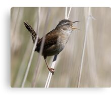 A Song of Spring Metal Print