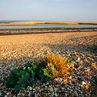Pagham harbour west sussex by adam swaine