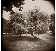 Tree #2 Photographic Print