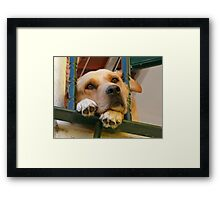 The look of Love :) Framed Print