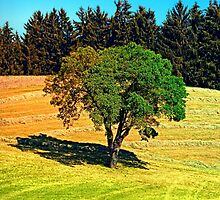 Another posing tree in summer scenery by Patrick Jobst