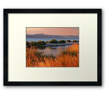 Dusk reeds Framed Print