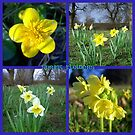 Yellow Spring flowers  ~ Marigold, Daffodils & Oxlips by ©The Creative  Minds