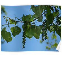 Cottonwood Seeds Too Poster