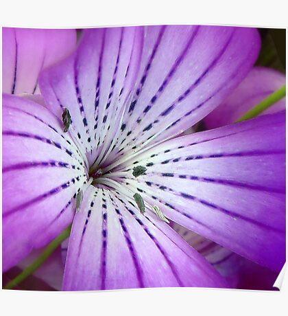 Concerto for Violet Poster