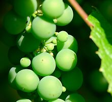 Grape by igorsin