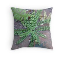 maidenhair spleenwort in bricks Throw Pillow
