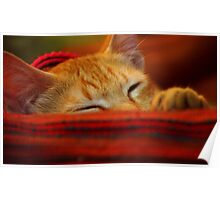 Colour me Red ... Cleo takes a nap Poster