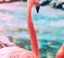 Exotic flamingos Sticker